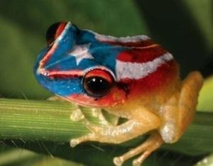 PuertoRicanCoqui